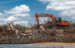 Ilha do Xingu sendo derrubada por causa da hidrelétrica.