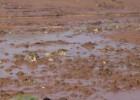 O que sabemos até agora sobre os riscos à saúde da lama da barragem