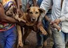 Os animais no desastre de Mariana