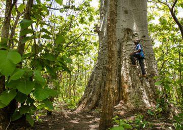 Pense nas Florestas: evento debate a importância de investir nessa área