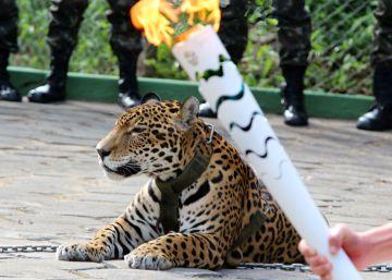 Após morte de Juma, ONG pede fim de exibição de animais silvestres