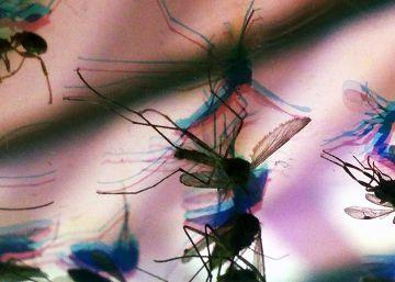 Pernilongo é possível transmissor da zika, diz pesquisa da Fiocruz