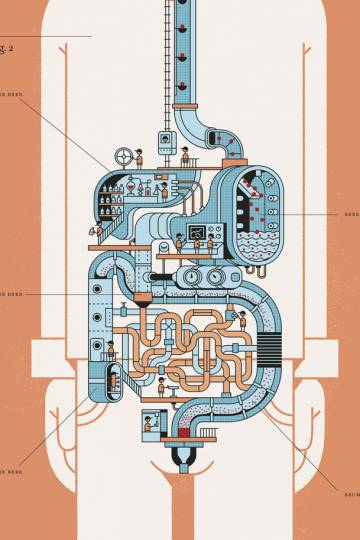 Viagem às nossas profundezas: a chave está no intestino