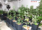 Imputado por vender semillas de marihuana a través de internet