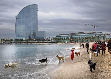 La playa para perros de Barcelona pierde la bandera azul