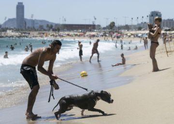 Cuatro gatos en el estreno de la playa para perros
