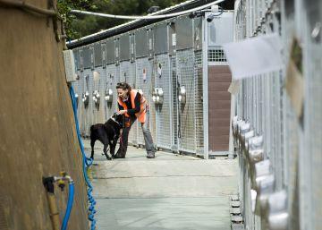 Aumentan las adopciones de animales en Barcelona