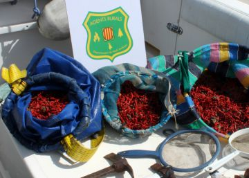 La Generalitat estudia prohibir temporalmente la pesca de coral