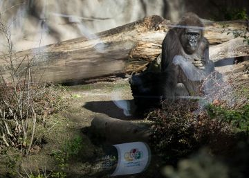 Una plataforma vol que el zoo de Barcelona no exhibeixi animals