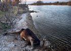 Abandonados junto al río