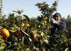 El acuerdo de la UE con Marruecos destruirá 16.000 hectáreas