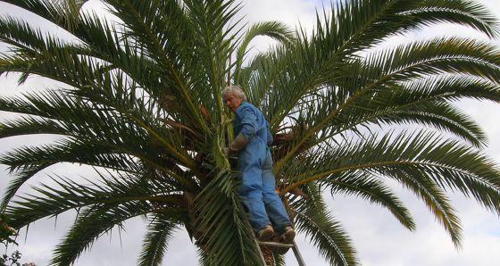 El director de la Estación Phoenix, Michel Ferry, inspeccionando una palmera.