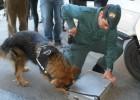 'Roger', un perro para combatir el contrabando de tabaco