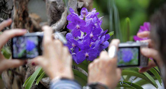 Una orquídea que se exhibe en la muestra inaugurada ayer en el Botànic de Valencia.