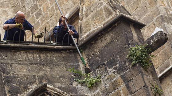 Dos operarios de mantenimiento arrancan las hierbas de la catedral.