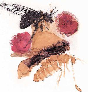 'Insectos', uno de los dibujos de Ignacio Rubiño que pueden verse en Sevilla.
