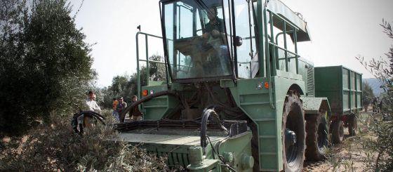 Una maquina recogiendo ramas de olivo en una finca de Andalucía.