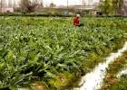 El parque agrario del Baix Llobregat reivindica sus productos