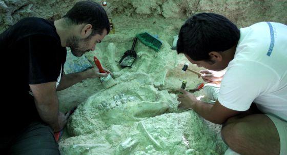 Una mandíbula de rinocérido asoma en el suelo en las últimas excavaciones.