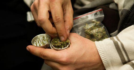Un miembro de la Asociación Barcelonesa Canábica de Autoconsumo manipula marihuana.