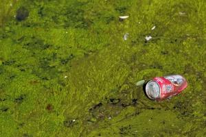 Detalle de las algas en el río.