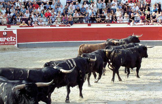 Toros de la ganadería de Palha, que se lidiarán el martes en Azpeitia.