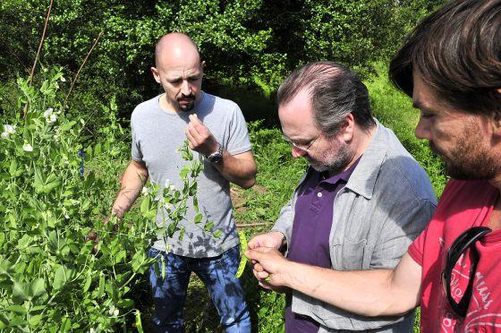 Santiago Pérez, primero por la derecha, muestra la cosecha de guisante lágrima a los cocineros Pedro Roca e Iñaki Bretal.