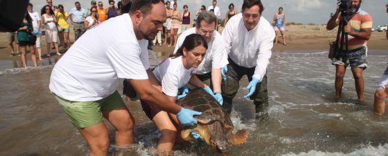 Miebros del CRAM liberan una tortuga