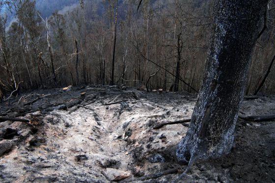 Imagen de una zona quemada en el incendio de As Fragas do Eume en el Ayuntamiento de A Capela.