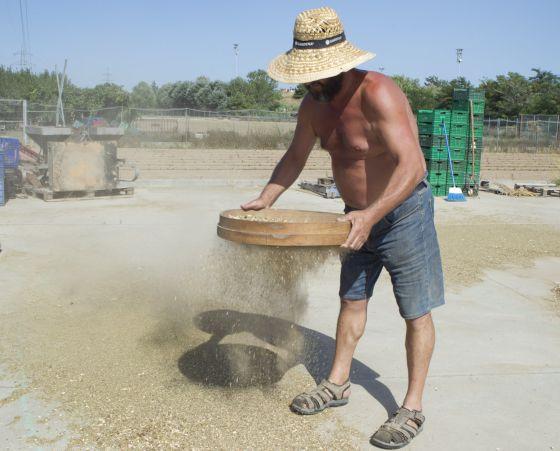 Albert Bou criba alubias en Cal Coracero, en el Parque Agrario del Baix Llobregat