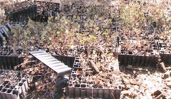 Planteles de árboles abandonados en el Parque Fluvial del Turia