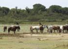 Valderas da por hecho que la Junta impedirá el gasoducto de Doñana