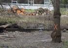"""La Xunta, abierta a """"ajustar"""" el plan que prevé una tala masiva en Sarria"""