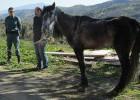 La fiscalía pide cárcel para el dueño de dos caballos a los que dejó morir
