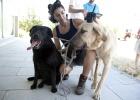 Las protectoras piden el fin del sacrificio de animales abandonados