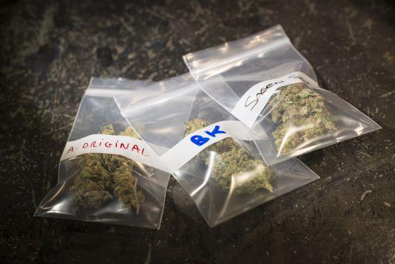 Variedades de marihuana listas para ser entregadas.