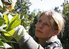 Un centenar de jornaleros denuncia una estafa en la campaña de naranja