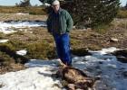 80 cabras mueren en un ataque atribuido al lobo