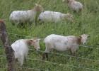 El nuevo Ayuntamiento de San Sebastián retira las ovejas de Bildu