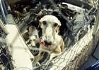 Madrid no sacrificará a los animales abandonados