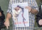 Un edil de Torà se enfrenta a un año de cárcel por matar a un perro