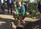 Madrid plantará 10.000 olmos resistentes a la grafiosis