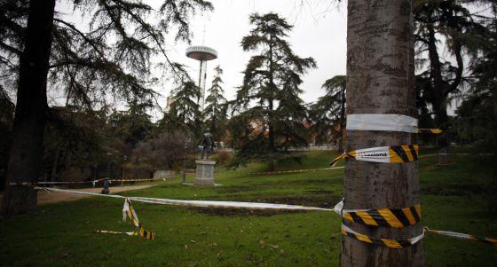 Árboles señalados para su apeo en el parque del Oeste