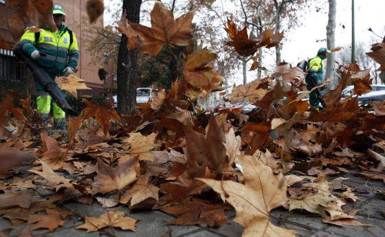 Operarios del Ayuntamiento de Madrid limpian las hojas caídas.