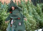 Dos viveros municipales acogen desde hoy los arboles de Navidad