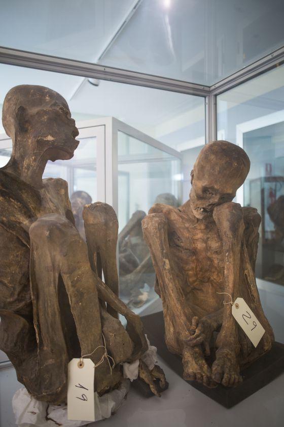 Cuerpos momificados en el museo de Antropología Médica Forense de la facultad de Medicina.