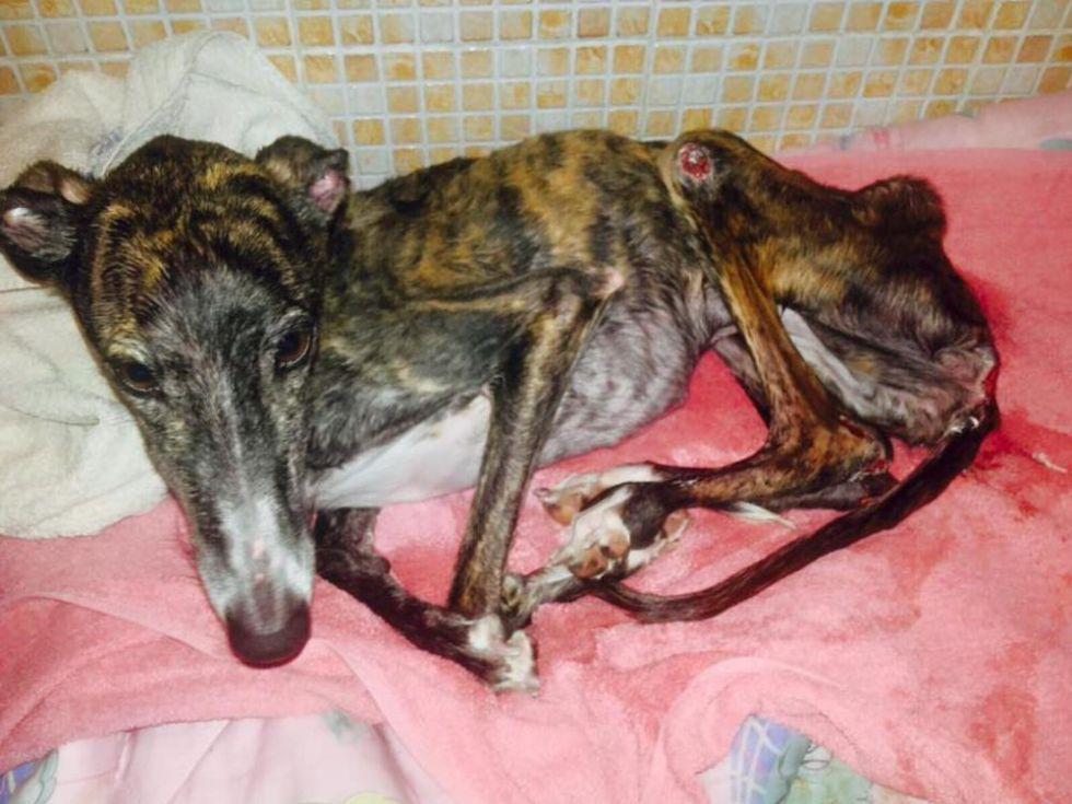 Uno de los perros que esperan ser adoptados en el Cimpa.