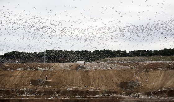 Cientos de gaviotas sobrevolaban ayer el vertedero de Alcalá de Henares.