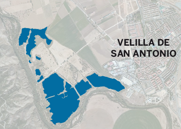 Las aves no paran en Velilla de San Antonio
