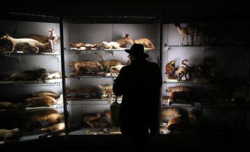Un asistente a la presentación del Congreso Hendrick's para Gente Curiosa' celebrada ayer en el Museo de Ciencias Naturales.